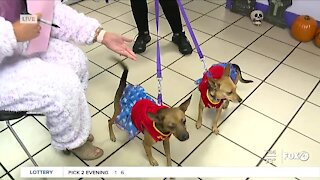 Halloween pet costume parade at Gulf Coast Humane Society