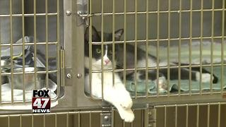 94 pets removed from home likely animal hoarding - Video