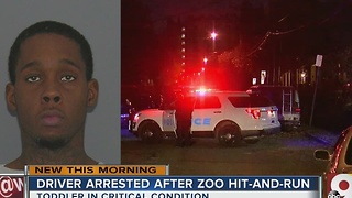 Driver arrested after zoo hit-and-run crash - Video