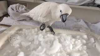 Ice Ice Birdie - Video