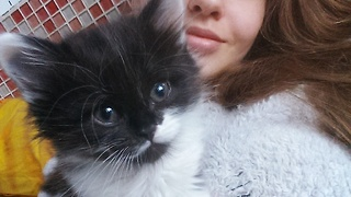 Kitten thinks owner's nose is play toy