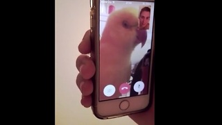 Parrot uses FaceTime to chat with owner - Video