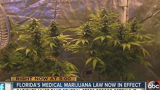 Florida's medical marijuana law now in effect - Video