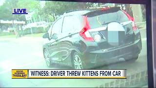 Woman searching for driver who threw two kittens out of moving car on Florida Ave. - Video