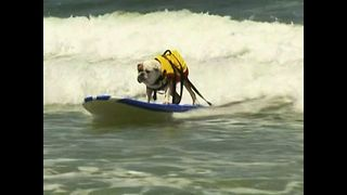 Surfing Dogs - Video