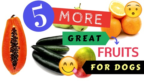 5 MORE Great Fruits for Dogs