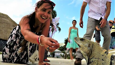 Bridesmaid has huge lizard eating out of her hand at tropical wedding