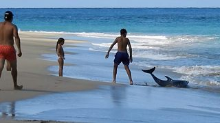 Dramatic moment family scrambles to save stranded dolphin after it washes up on beach - Video
