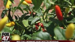 Red chili peppers have health benefits - Video