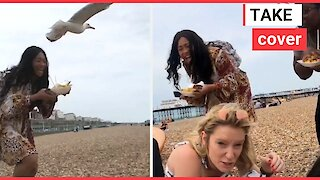 Hungry seagulls chase after woman's fish & chips