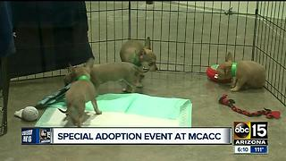 Free adoptions this weekend at county animal special - Video