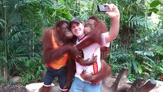 Orangutans kiss and play with American tourist