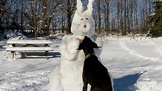 Blind old Great Dane caught stealing from Easter Bunny - Video