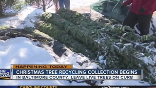 Christmas tree recycling collection begins in Baltimore County