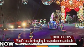 What's next for Ringling Bros. performers, animals - Video