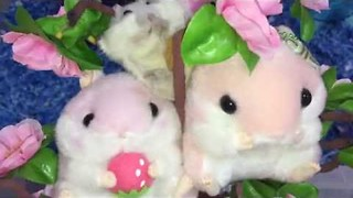 Adorable Hamster Just Lounging in a Tree - Video