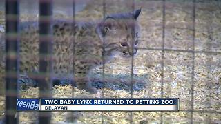 Stolen lynx returned to Wisconsin petting zoo