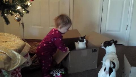 Cat defends most prized possesion from dog