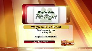 Wag N Tails- 7/17/17 - Video