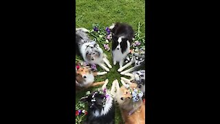 Well-disciplined dogs show off their flower costumes