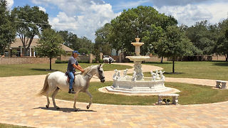 Casa Bella Estate Courtyard with Paso Fino Andalusian Horse - Video