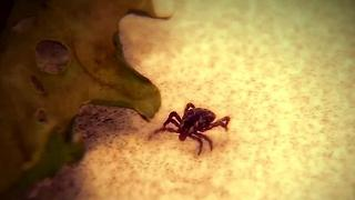 Tick season could be worst ever - Video