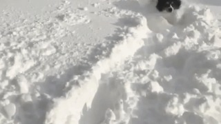 Tiny Dog Struggles Through Deep Snow in Erie - Video