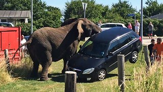 Elephant Attack: Circus Animal Lifts Car Off The Ground - Video