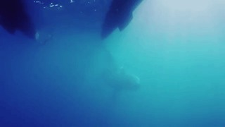 Aussie Boat Crew Has 'Once in a Lifetime' Encounter With Humpback Whales - Video