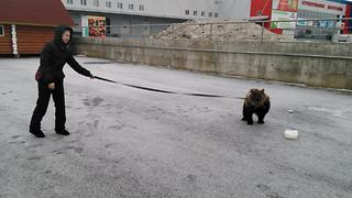 Woman casually takes bear cub for a walk?! - Video
