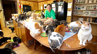 This Woman Shares Her Home With 1,100 Felines - Video