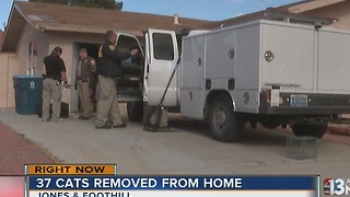 37 cats removed from Las Vegas home - Video