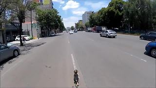Intense high-speed dog rescue through streets of Mexico City - Video
