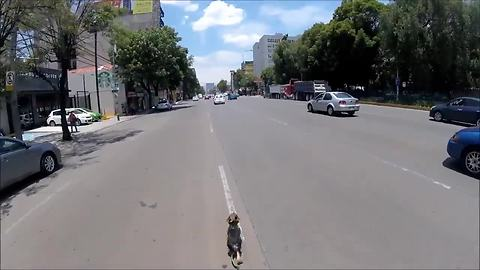 Intense high-speed dog rescue through streets of Mexico City