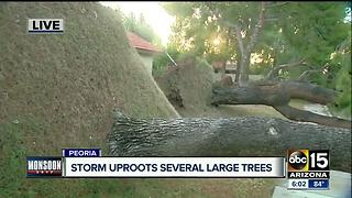 Clean-up underway in Peoria after storm damage - Video