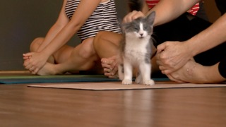 Kitten yoga comes to Tucson - Video
