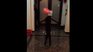 Poodle displays impressive balloon juggling skills - Video