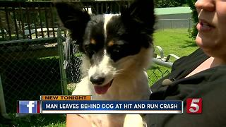 Man Leaves Dog Behind At Scene Of Hit-&-Run - Video