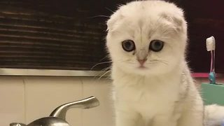 Who says kittens don't like water? - Video