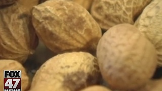 New method in preventing peanut allergies - Video