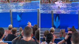 Orca at Sea World in Texas splashes entire section of audience