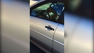 Dog Honks Horn For Owner's Attention - Video
