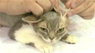 Cat Grooming Basics - Video