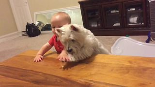 Dog and baby's epic showdown for last piece of chicken - Video
