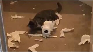 Cat completely destroys toilet roll