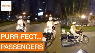 Four Cats Ride Alongside Motorcyclist Down Hanoi Street - Video