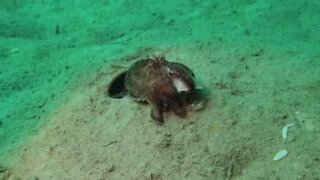 Octopus spews out crab leftovers