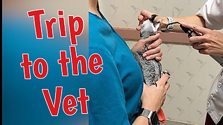 Einstein The Talking Parrot Is Anxious To Visit The Veterinarian
