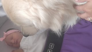Gentle Doggy Is Anxious To Meet A Newborn Baby
