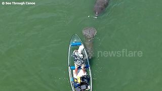 Friendly manatees chase canoe off Florida